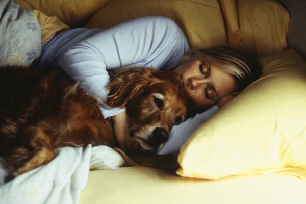 perro despierto mientras su dueña duerme