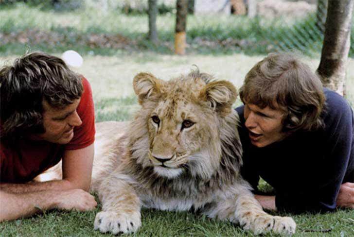 christian el leon que recordo a sus dueños humanos despues de un año de no verlos