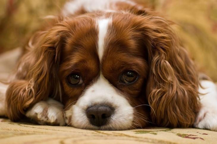 perro esperando con cara triste o aburrida
