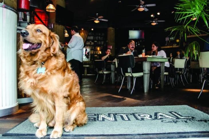 Restaurantes para perros en México