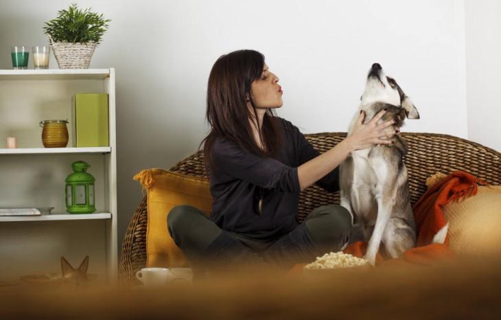 perro tratando de ignorar a su dueña