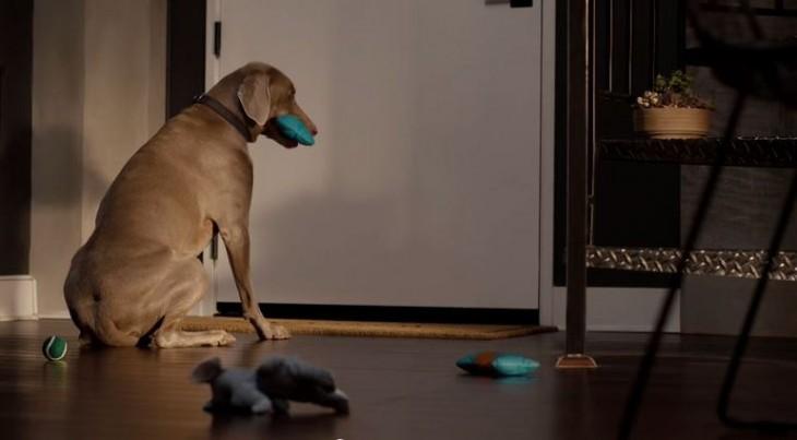 perro esperando a que su dueño llegue a la casa para jugar con él