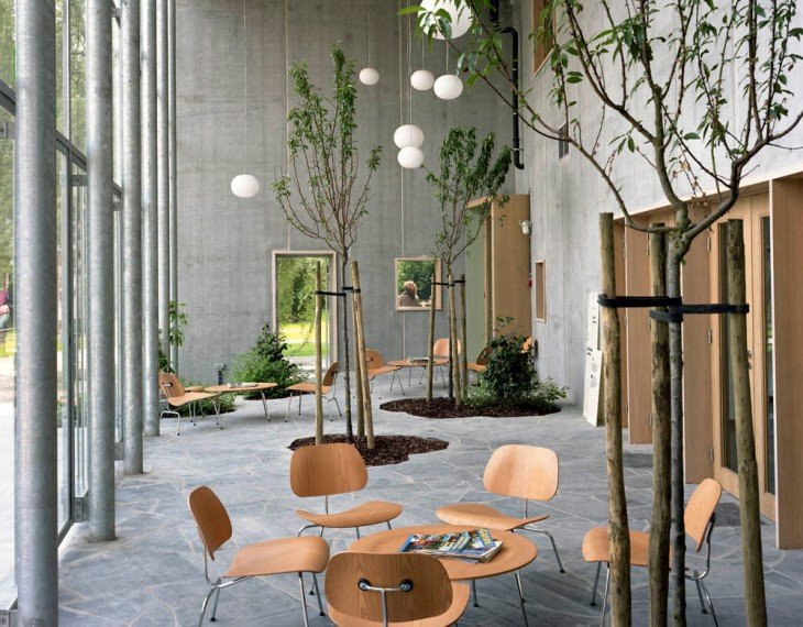 arboles de bambu creciendo en una casa
