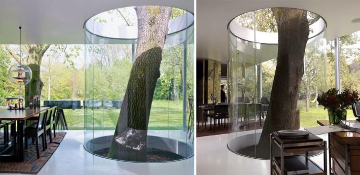 arbol encerrado en un muro de cristal