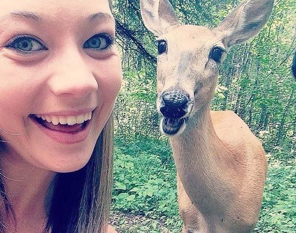 ciervo posando para la selfie
