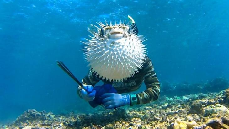 pez globo se asusta con el flash