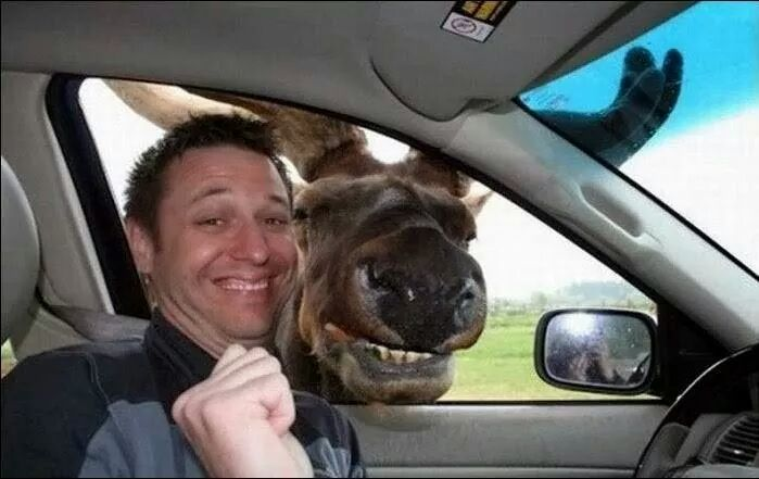 alce se toma la selfe con el tipo del volante