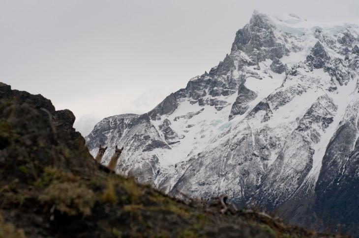 llamas asomando la cabeza a través de la montaña