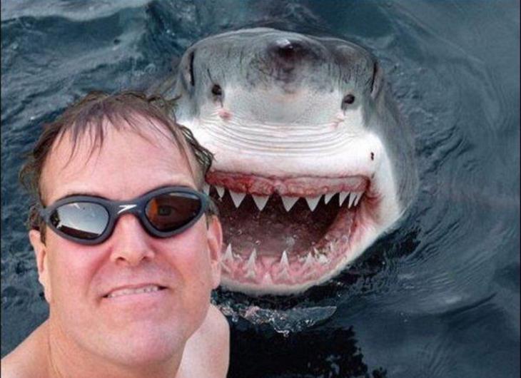 tiburon parace qie esta sonriendo