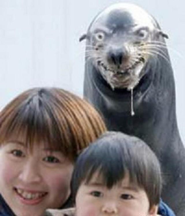 foca freaky killler foca