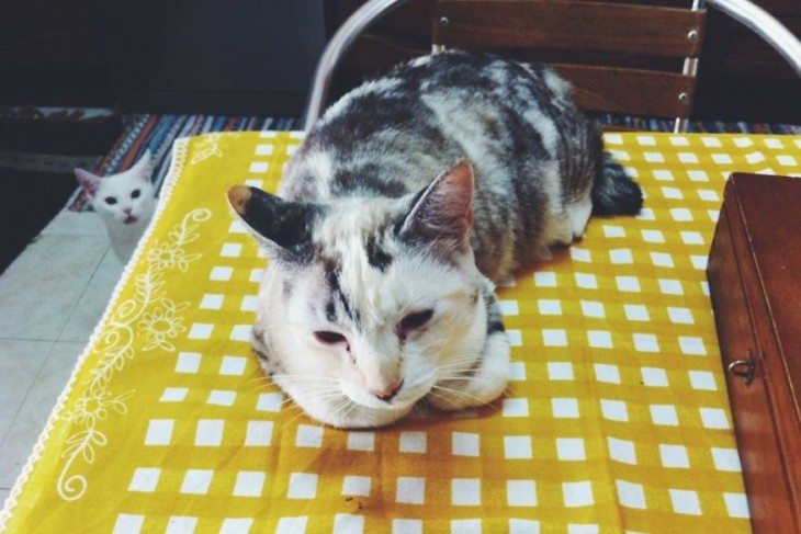 gatito al fondo troleando al otro