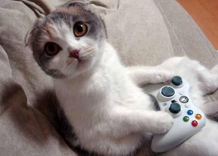gato con un control de xbox