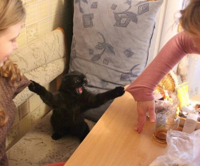 fotografía de un gato sosteniendo los suéteres de una madre y una hija