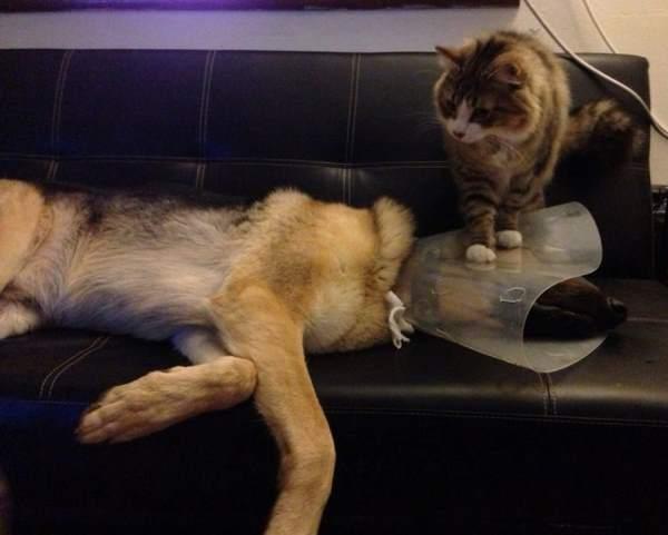 Gato sentado arriba de la cabeza de un perro en un sillón