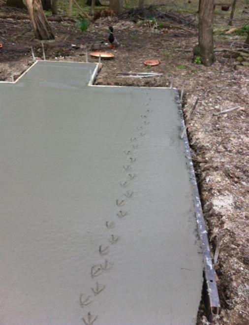 Cemento fresco con las patas de un pato que paso encima