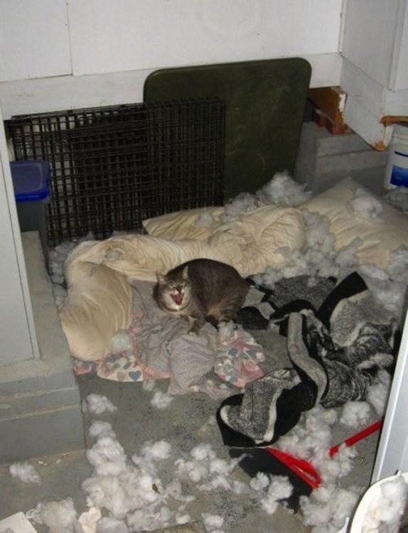 Gato alrededor de un montón de cojines destrozados