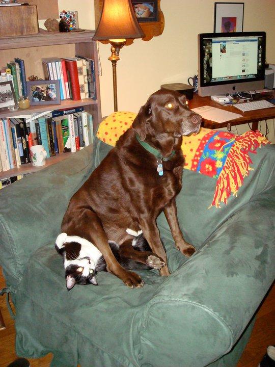 un perro sentado sobre un gato