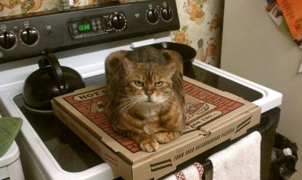 Gato acostado sobre una caja de pizza que esta sobre una estufa