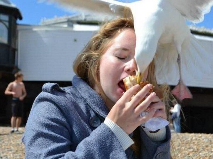Un pájaro blanco robando la comida de una chica