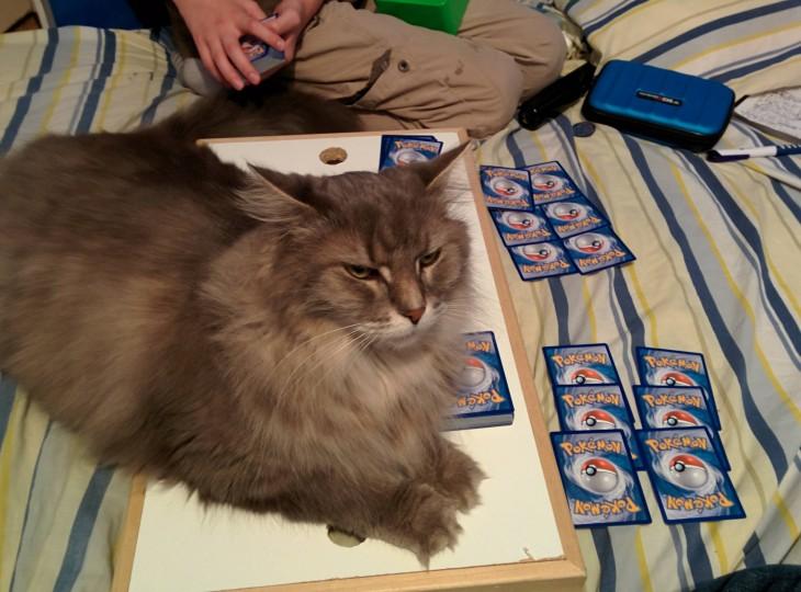 gato acostado sobre una tabla con cartas de Pokémon