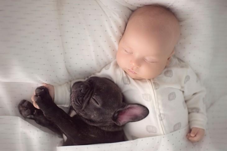 Cachorro y un niño dormidos en una cama