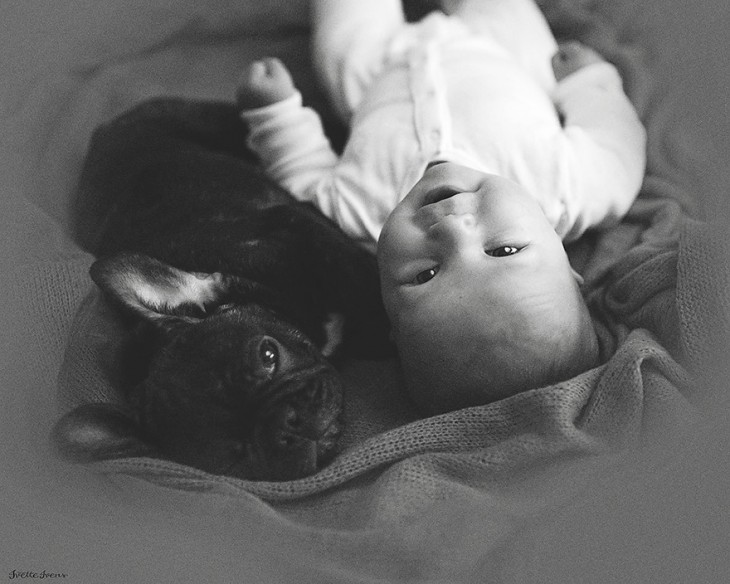 Caras de un perrito y su perrito bulldog