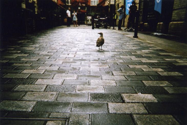 Fotografía de una paloma en una calle de Londres
