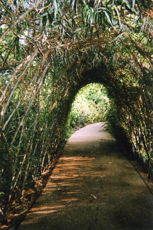 Fotografía del Túnel de la naturaleza o de la luz y el fin, Stratford, Londres