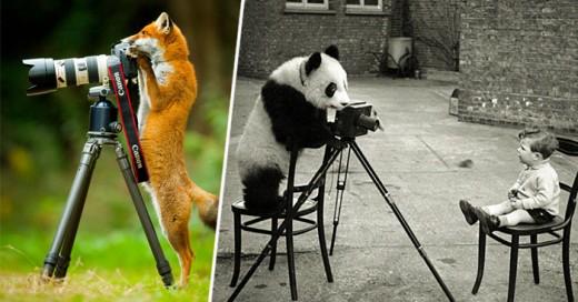 Con frecuencia vemos capturas tomadas por verdaderos fotógrafos profesionales sobre animales salvajes en pleno entorno silvestre. Sin embargo, ¿cuándo hemos visto que pase lo contrario? Es decir, ver a los animales tomando esas imágenes y explorando las cámaras?