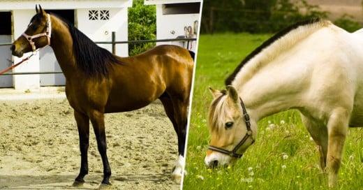 Los caballos son de los animales más increíbles que existen, ya que se caracterizan por ser fuertes, majestuosos, rápidos, pero sobre todo elegantes. Además, tienen una relación interesante con seres mitológicos como los unicornios o Pegaso, y con grandes héroes y príncipes.