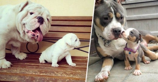 25 Dogs With Their Cute Mini-Mes