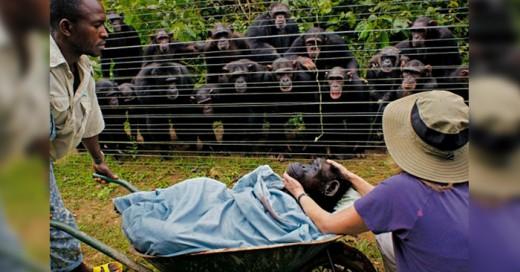 Las imágenes, historias y videos que a continuación te presentaremos nos han hecho cuestionarnos si realmente los animales pueden sentir cariño, protección y amor por sus seres queridos o es sólo su instinto.