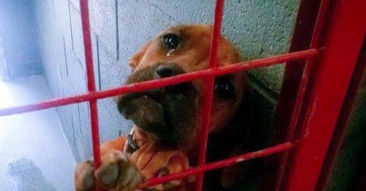 Cada vez son más las historias de perros inocentes que peligran de ser sacrificados en albergues y refugios.