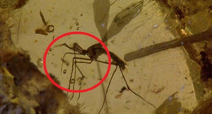 Mosquito de la película Jurasic Park