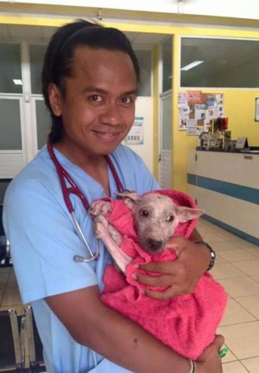 Veterinario cargando a Kelsey la perrita rescatada de la calle