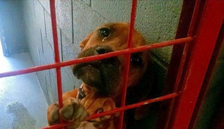 Fotografía de una perrita con ojos llenos de lágrimas en un refugio