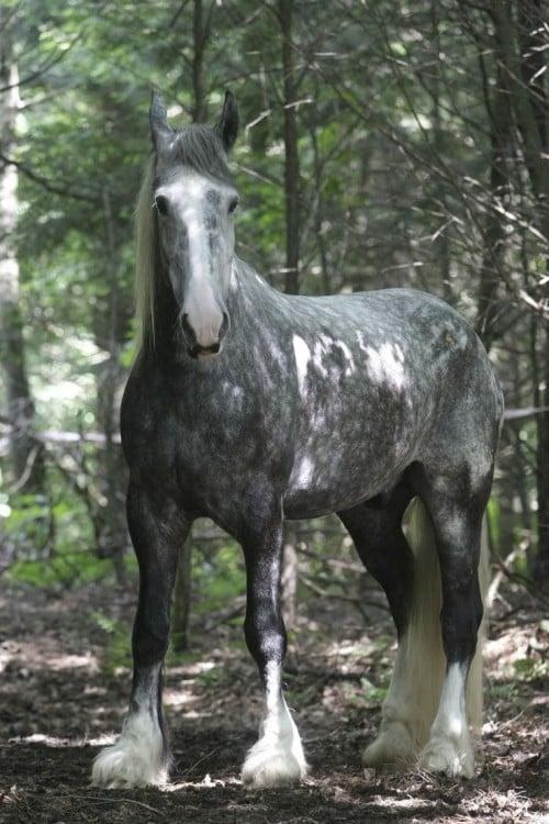 Te muestro los 15 caballos mas hermosos de todos los tiempos