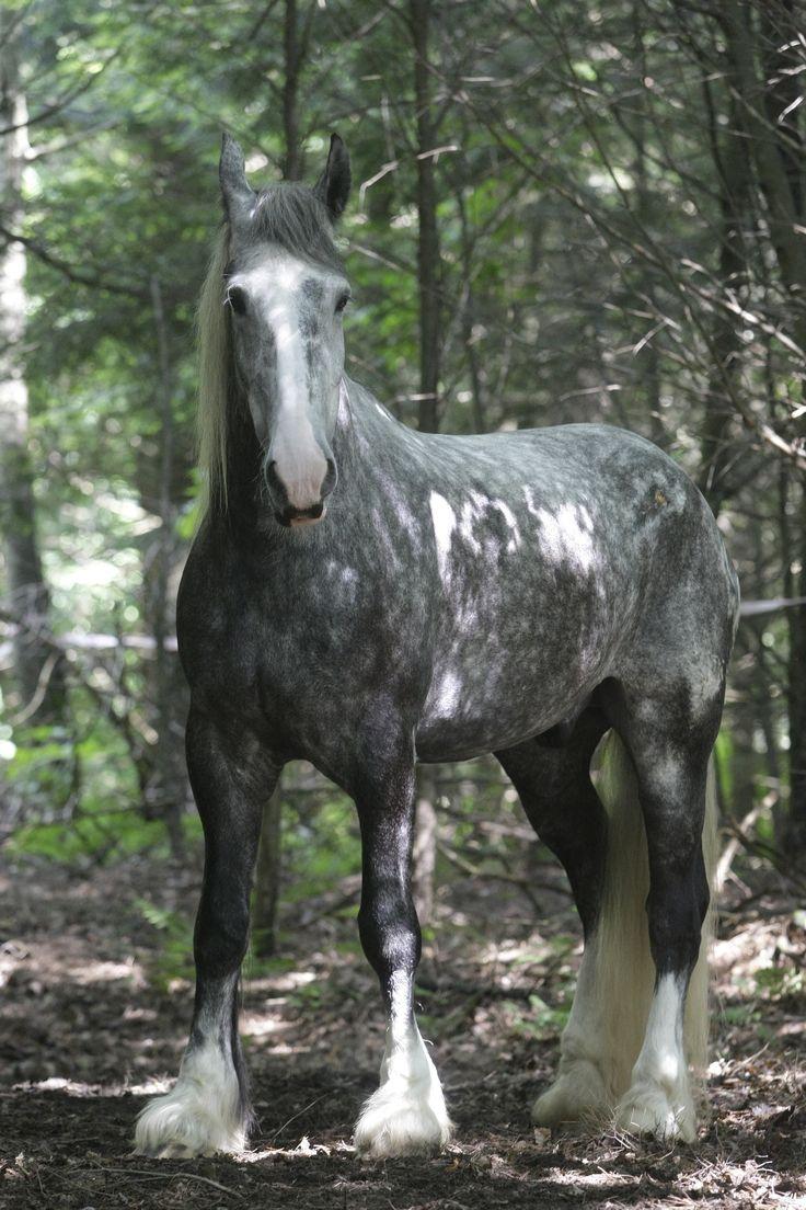 15 de los caballos más hermosos de todo el mundo