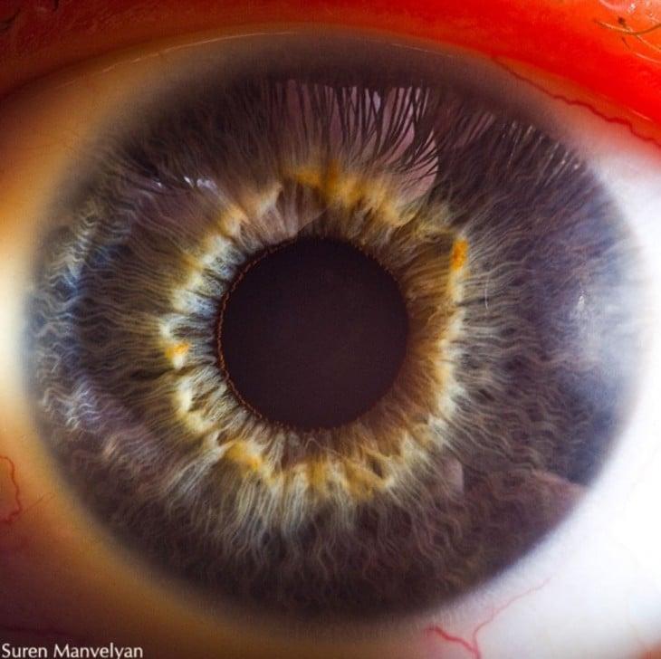 detalhe do interior de um olho, foto por Suren
