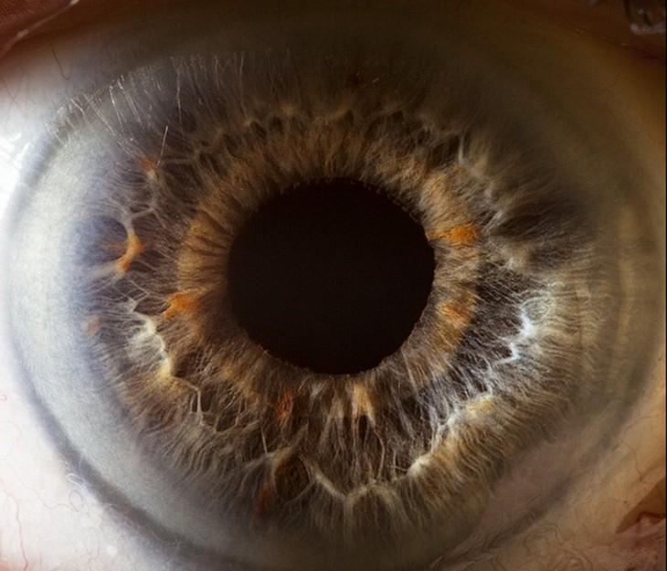 fotos a detalles de ojos por Suren