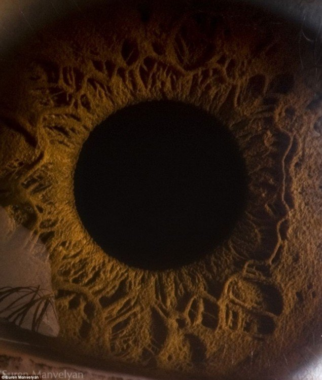 detalle en el interior del ojo