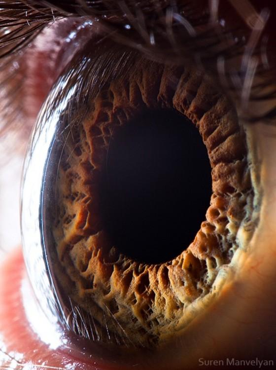 imagem do interior de um olho humano