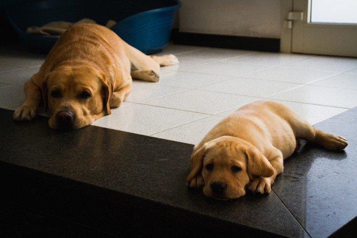 Perro con su cachorro acostados juntos en el suelo
