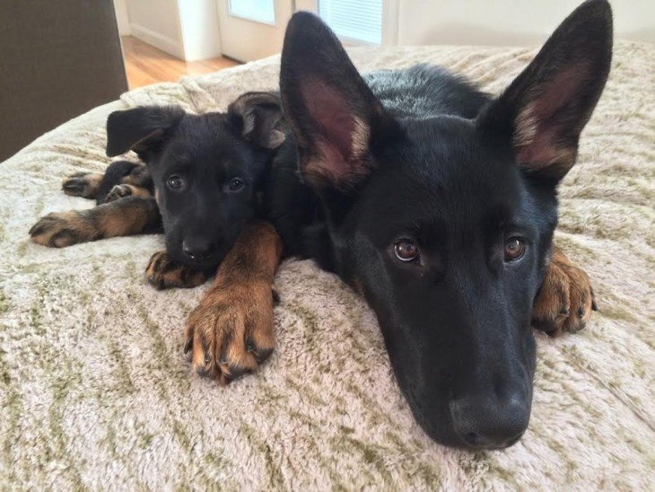 Perro acostado junto a su cachorro