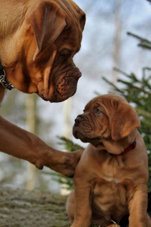 Perro con una pata sobre su pequeño cachorro