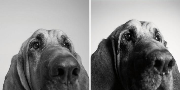 imagen del perrito Copper a sus 3 años y 10 años