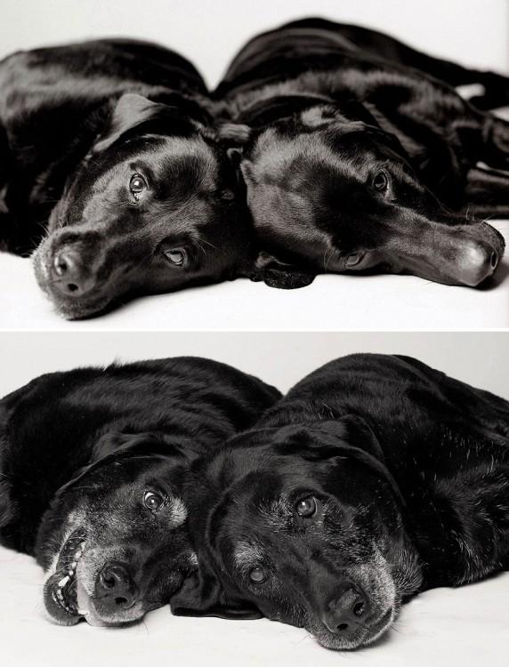 Foto de las perritas Maddie: 7 años y 14 años ; Ellie: 6 años y 13 años