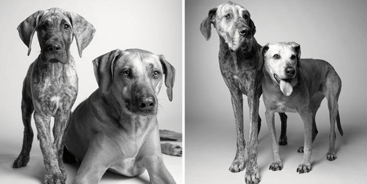 Fotografías de las perritas Kayden y Brodie