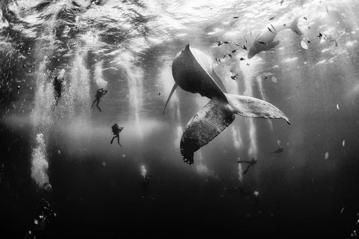 Primer lugar: Ballena Whisperers, fotografía national geographic 2015