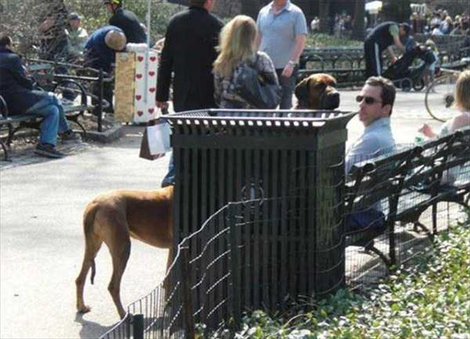Perro en un parque cerca de una banca donde esta un hombre sentado